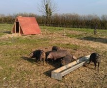Faye Litherland and Tim Ball - Somerset Farm Traditional Breeds - Ark of Taste Pig Breeds