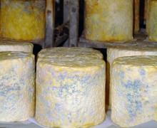 Artisan Dorset Blue Vinny Cheese
