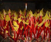 Yorkshire Forced Rhubarb