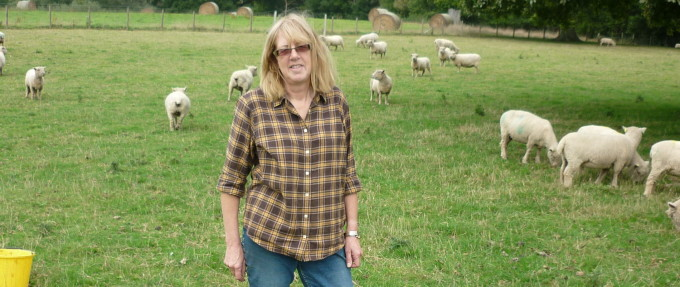 Christine Greenfield – Bokesell Breeding – Southdown Sheep