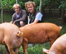 Nick and Jon Francis - Paddock Farm - Tamworth Pig