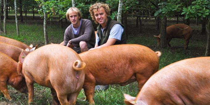 Nick and Jon Francis – Paddock Farm – Tamworth Pig