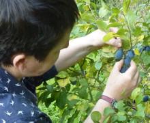 Catherine Moran - Sweet Stuff Slow - Shropshire Prune Damson