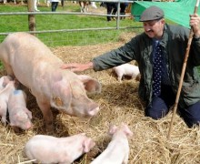 Mike and Luke Cross - Kilvrough Welsh Pigs - Pedigree Welsh Pig