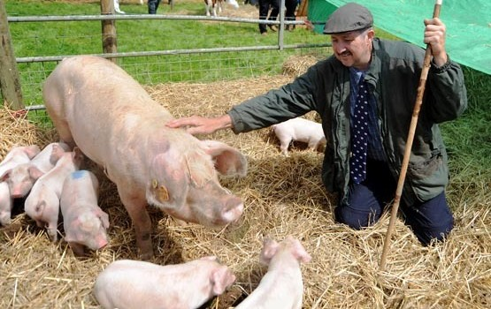 Mike and Luke Cross – Kilvrough Welsh Pigs – Pedigree Welsh Pig