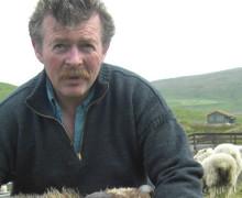 Ronnie Eunson - Uradale Farm - Shetland Kye