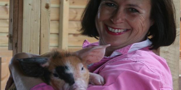 Susan Tanner – Plum Pudding Pigs – Oxford Sandy & Black Pigs