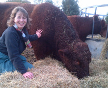 Lisa and Stuart Osman - Provisio - Devon Red Ruby Cattle