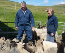 Richard Briggs - Briggs Shetland Lamb - Native Shetland Lamb