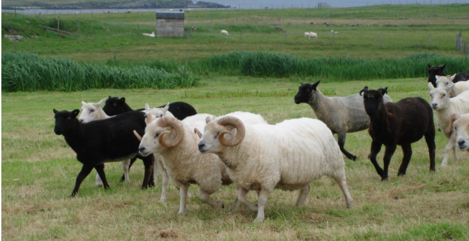 Roast Shetland Stuffed Leg of Lamb with Musselburgh Leeks