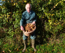 Andrew Tann - Crapes Fruit Farm - Medlar