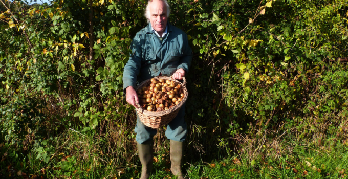 Andrew Tann – Crapes Fruit Farm – Medlar