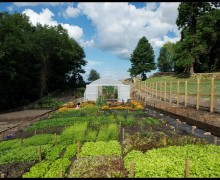 Erica Randall - The Scottish Kitchen Garden - Musselburgh Leeks