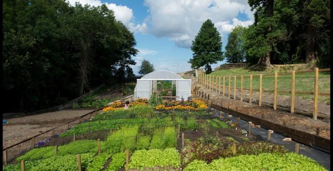 Erica Randall – The Scottish Kitchen Garden – Musselburgh Leeks