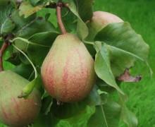 Janet and Martin Harris - Butford Organics - Three Counties Perry
