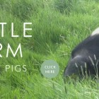 A piggy event at Buttle Farm for Slow Food Week 2014!