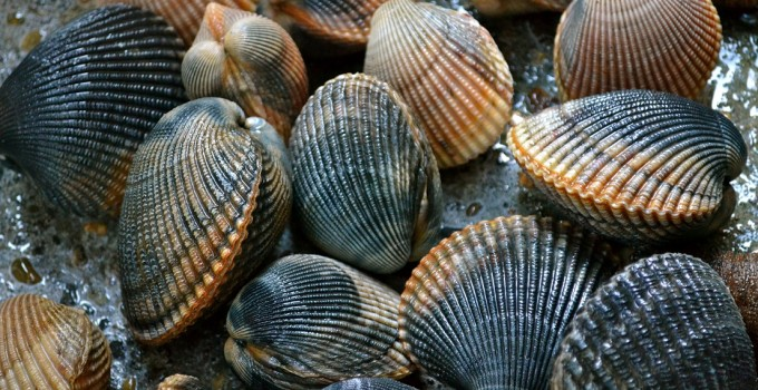 Penclawdd cockles