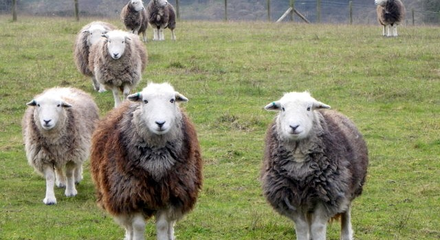 And the winner is… Lake District Farmers!