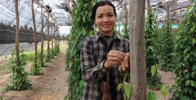 Kadodē Kampot Pepper UK
