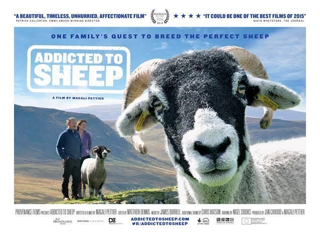 Addicted to Sheep
