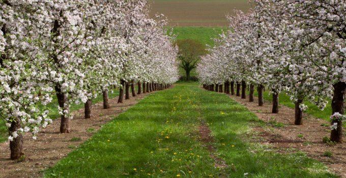 Sandford Orchards