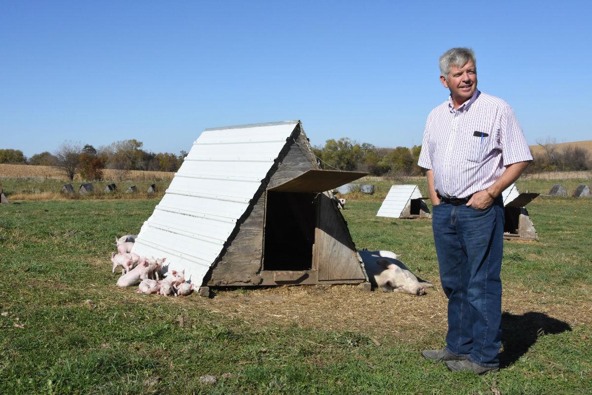 Pig Tales and Antibiotics