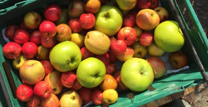 appleTeme