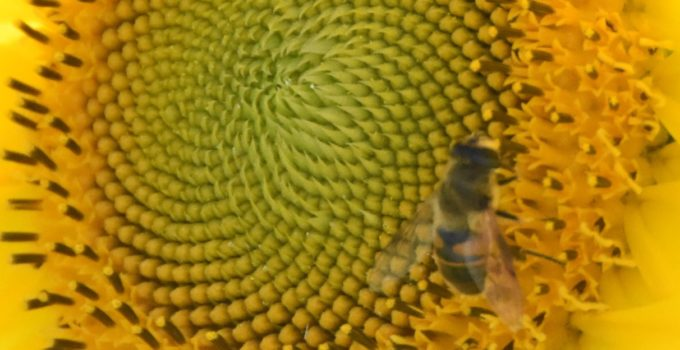 New research suggests: If we want to save the bees we need to eat less honey