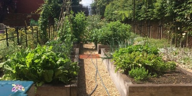Slow Garden Chronicle: An Introduction