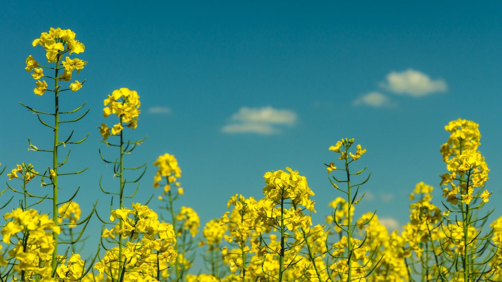 Food of the Future: Oilseed