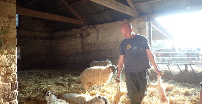 Patient mums, escape artists & a youth gang: it's lambing season!