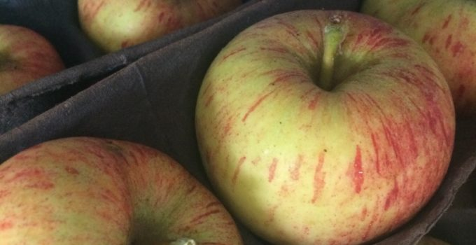 The Slowfix: Preserving Apples